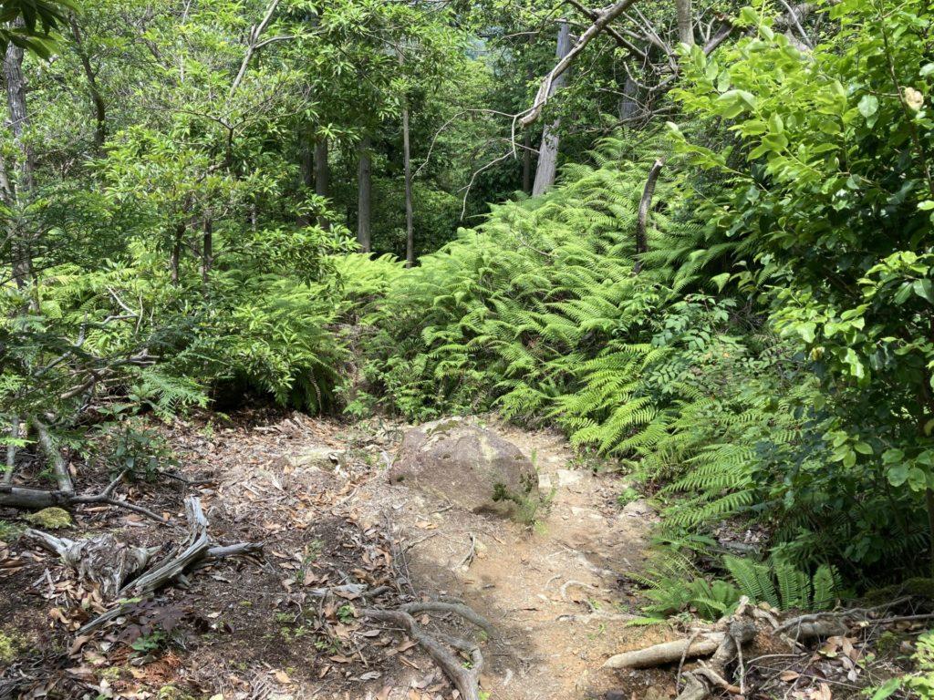 第二道標付近の登山道